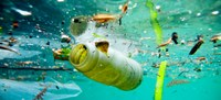 Biodegradable Plastics Are Not the Answer to Reducing Marine Litter, Says UN                                                                                                                                                                                    - UNEP