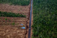 Chinese banks funding rainforest destruction in Indonesia