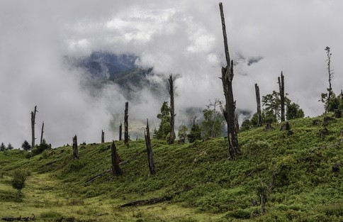 Forests move centre stage in India's climate plan