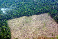 Jokowi Folds Emissions Agency BP REDD+ Into Forestry Ministry