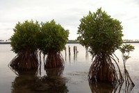 Sri Lanka first nation to protect all mangrove forests