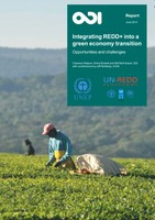 Integrating REDD+ into a Green Economy Transition - Opportunities and Challenges